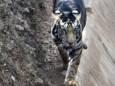 В Индии замечен очень редкий вид черного тигра