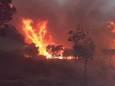 Лісові пожежі охопили 10 північних провінцій Алжиру