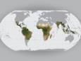 Норвежцы создали глобальную спутниковую карту тропических лесов