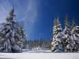 До -16 градусів: синоптик розповів, якою буде зима в Україні