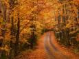 Погода в Україні на неділю, 15 листопада