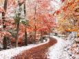 Погода в Україні на понеділок, 16 листопада