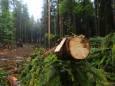 Вырубка лесов меняет состав бактерий почвы