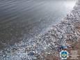 В лимане Азовского моря массово погибла рыба