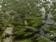 Наводнения в мексиканском штате Табаско затронули 50% всех банановых плантаций