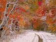 Погода в Україні на неділю, 22 листопада