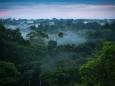 Ученые выяснили, какие леса лучше поглощают углекислый газ