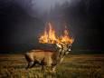 Через пожежі можуть зникнути більше 4 тисяч видів тварин і рослин