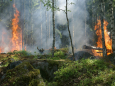 В Алжирі після лісових пожеж садять дерева