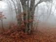 Погода в Україні на п'ятницю, 27 листопада