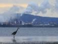 Снижение загрязнения атмосферы озоном спасло полтора миллиарда птиц в Северной Америке