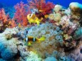 Солнцезащитные кремы пагубно влияют на кораллы