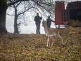 На остров в Одесской области завезли оленей и ланей