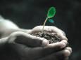 Растения стали меньше поглощать углекислый газ