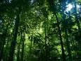 Долголетие деревьев зависит от среднегодовых температур