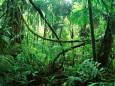Тропічні ліси Бразилії почали не поглинати, а виділяти вуглекислий газ