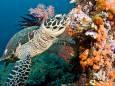 Коралові рифи можуть зникнути до кінця століття