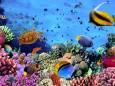Коралловые рифы Египта под серьезной угрозой