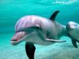 Министерство охраны окружающей среды разработало меры по защите дельфинов