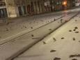 У Римі сотні птахів загинули внаслідок новорічних феєрверків