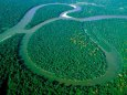 Амазонські ліси можуть зникнути до 2064 року