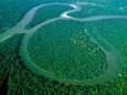 Амазонские леса могут исчезнуть к 2064 году