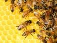 В Украине из-за аномального тепла проснулись пчелы. Видео