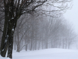 Погодные приметы на 5 января