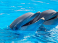 На Бали открыли первый в мире центр реабилитации дельфинов
