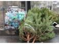 Киевлян призывают сдавать елки на переработку