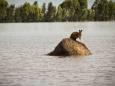 Австралия страдает от потопов и пожаров