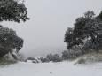 «Філомена» завалила Іспанію снігом
