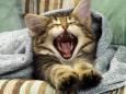 Почему зевота «заразна» и зачем она нужна