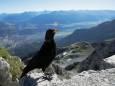 В швейцарских Альпах 2020 год выдался самым теплым в истории