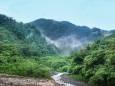 За 13 лет люди уничтожили более 40 млн га тропических джунглей