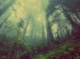 Понад 300 млн гривень збитків зазнали ліси та рослинний світ протягом 2020 року