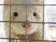 В Финляндии создают вакцину от коронавируса для животных