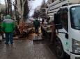 Сильный ветер в Одессе повалил десятки деревьев