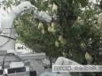 Розроблено робота, який автоматично збирає фрукти в садах