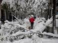 Рекордна заметіль у Мадриді пошкодила півмільйона дерев