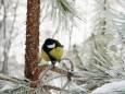 Погода в Україні на п'ятницю, 29 січня