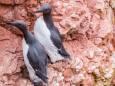 Арктичні птахи масово вмирають через глобальне потепління