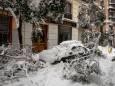 В Мадриде клонируют особо ценные деревья, пострадавшие от шторма