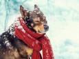 Украинцев призвали заботиться о животных во время морозов