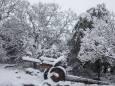 Сильні снігопади обрушилися на Сирію, Ліван, Ізраїль, Палестину, Йорданію, Саудівську Аравію та Єгипет