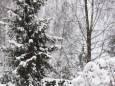 Погода в Україні на неділю, 21 лютого