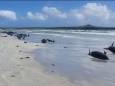 У побережья Базаруто погибло 111 дельфинов