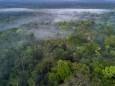 Нелегальний продаж лісів Амазонки виявили в Facebook