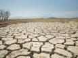 2021 будет бить рекорды: в Украине прогнозируют сильную засуху