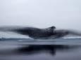 Зграя шпаків утворила величезну птицю над озером: неймовірне фото